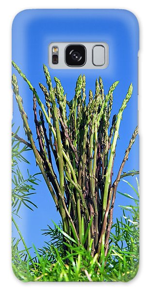 Asparagus Galaxy Case - Wild Asparagus (asparagus Acutifolius by Nico Tondini