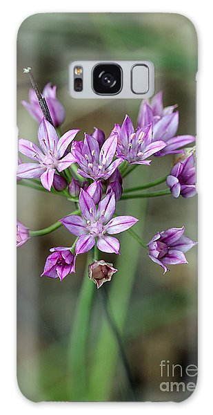 Wild Garlic - Allium Drummondii Galaxy Case