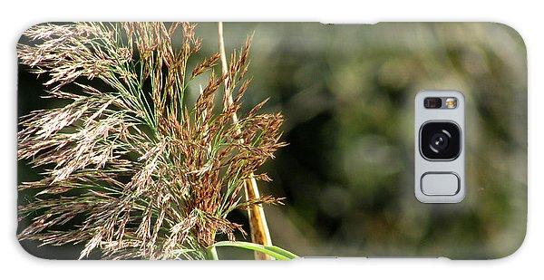 Wild Grasses II Galaxy Case by Kimberly Mackowski
