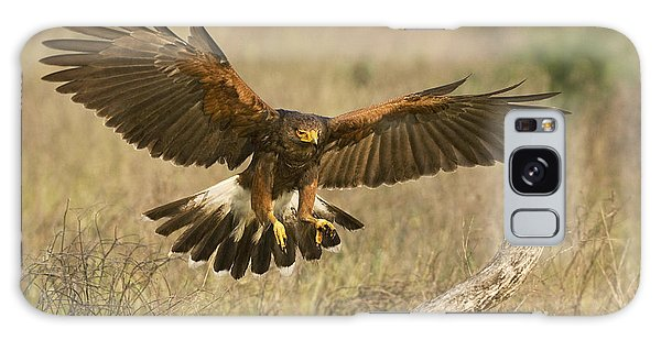Wild Harris Hawk Landing Galaxy Case