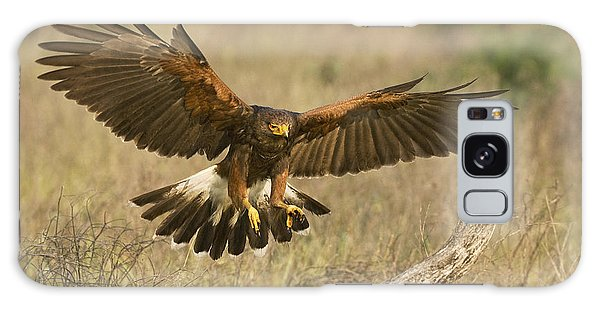 Wild Harris Hawk Landing Galaxy Case by Dave Welling