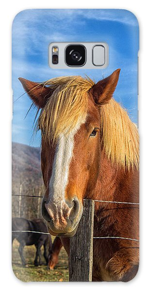 Wild Horse At Cades Cove In The Great Smoky Mountains National Park Galaxy Case