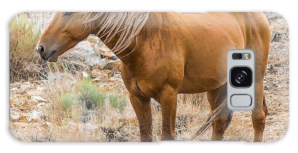 Wild Palomino Stallion Galaxy Case