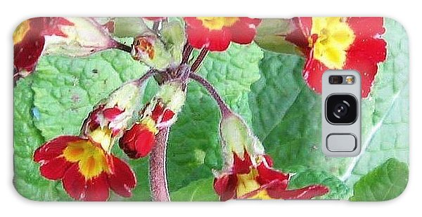 Galaxy Case featuring the photograph Wild Primroses by Deb Martin-Webster