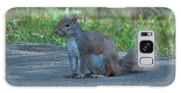 Wild Squirrel Galaxy Case