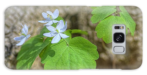 Wildflower In Woods Galaxy Case by Wanda Krack