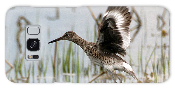 Willet Taking Flight Galaxy Case