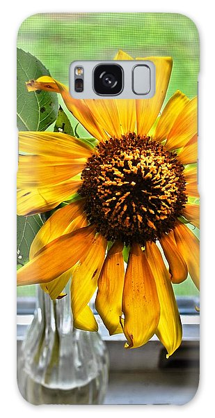 Wilting Sunflower In Window Galaxy Case