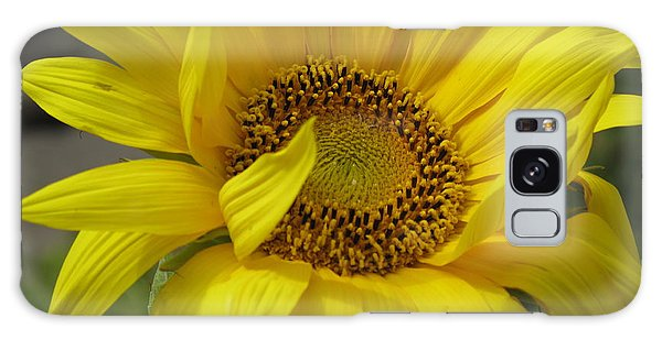Windblown Sunflower Three Galaxy Case
