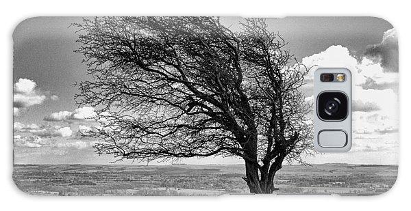 Windswept Tree On Knapp Hill Galaxy Case