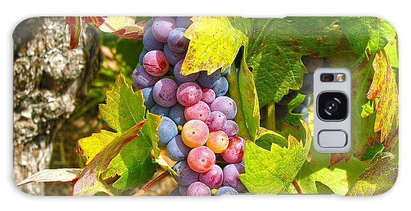 Wine Grapes II Galaxy Case