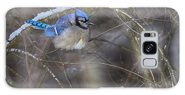 Winter Blue Jay Galaxy Case by Gary Hall