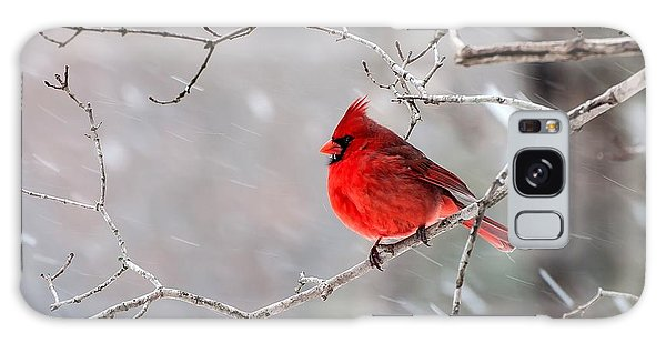 Winter Cardinal Galaxy Case by Debbie Green