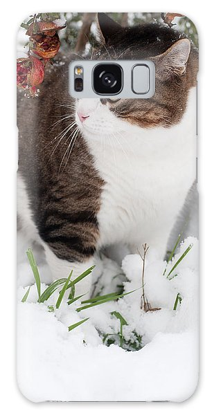Winter Cat Galaxy Case by Laura Melis