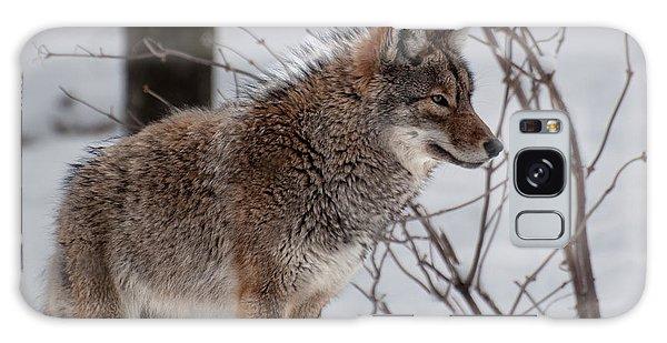 Winter Coyote Galaxy Case by Bianca Nadeau