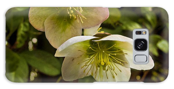 Winter Hellebore Galaxy Case