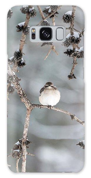 Winter Mockingbird Galaxy Case