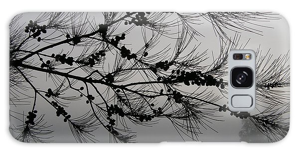 Winter Pine Branch Galaxy Case by Bev Conover