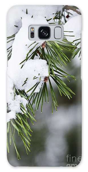 Pine Branch Galaxy Case - Winter Pine Branches by Elena Elisseeva