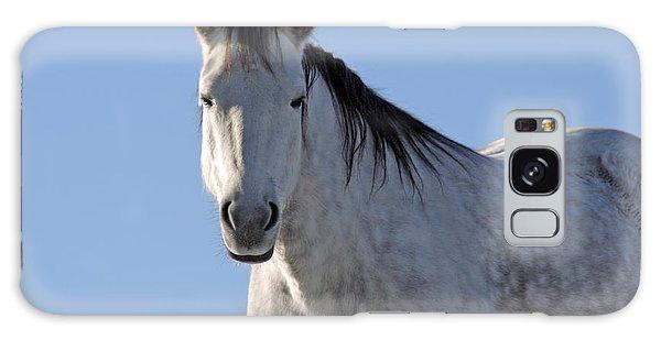 Winter Pony Galaxy Case