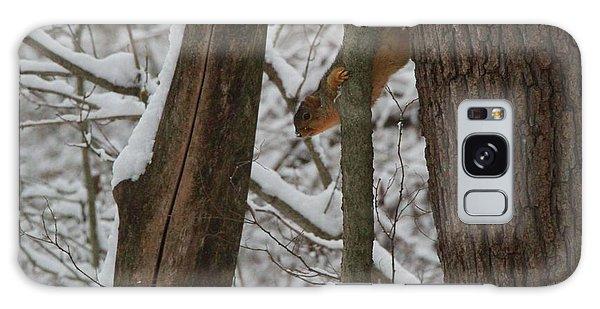 Winter Squirrel Galaxy Case by Dan Sproul