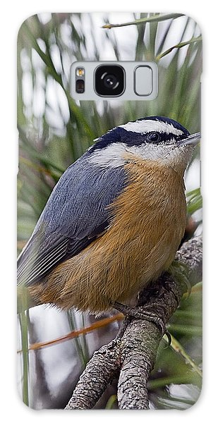 Winter Visitor - Red Breasted Nuthatch Galaxy Case