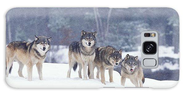 Winter Wolf Pack Galaxy Case