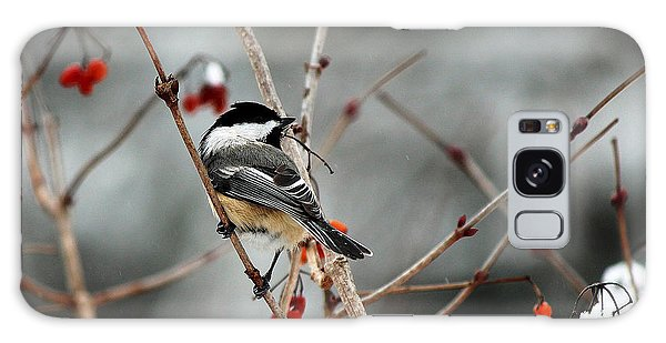 Wintertime Chickadee Galaxy Case