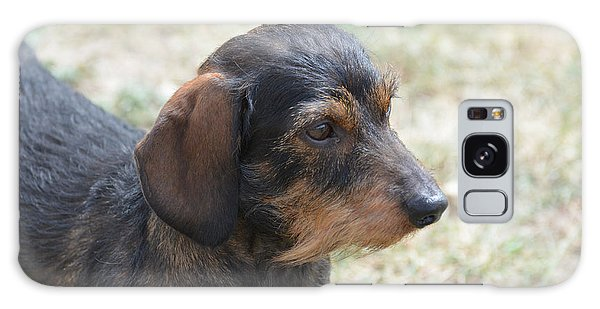 Wire Haired Daschund Galaxy Case