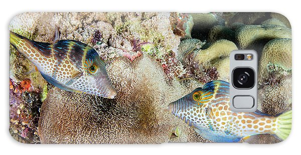 Behaviour Galaxy Case - Wire-net Filefish Mating Display by Louise Murray