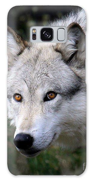 Wolf Stare Galaxy Case by Steve McKinzie