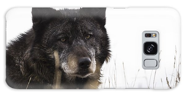 Black Wolf Galaxy Case