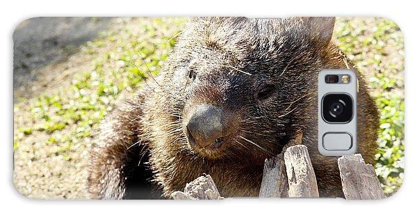 Galaxy Case featuring the photograph Wombat Scratching by Debbie Cundy