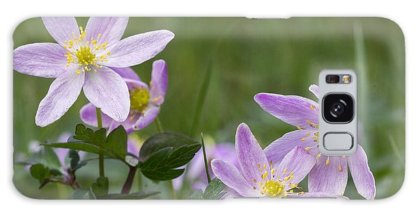 Wood Anemone Galaxy Case