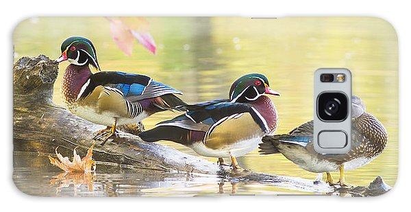 Wood-ducks Panorama Galaxy Case by Mircea Costina Photography