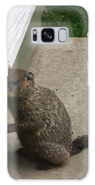 Groundhog Galaxy Case - Woodchuck by Bonnie Sue Rauch