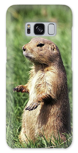 Groundhog Galaxy Case - Woodchuck by Tony Craddock/science Photo Library