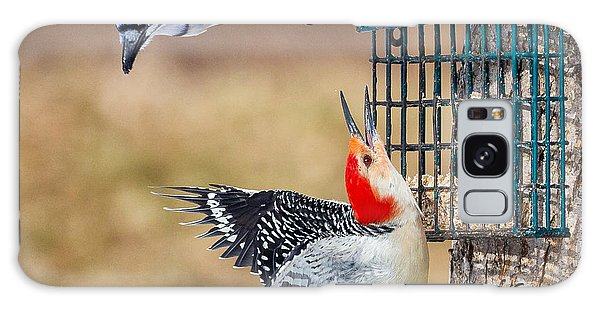 Woodpeckers And Blue Jays Square Galaxy Case
