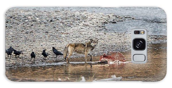 World Famous Yellowstone Gray Wolf 06' Galaxy Case