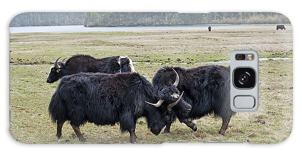 Yaks Fighting In Potatso National Park Galaxy S8 Case