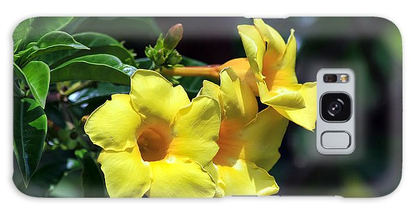 Yellow Allamanda Galaxy Case by Teresa Zieba
