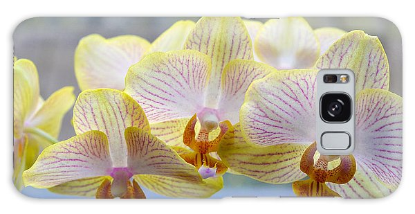 Yellow And Pink Orchids Galaxy Case by Tine Nordbred