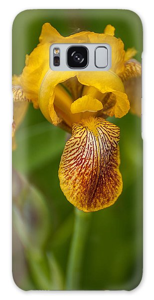 Yellow Bearded Iris Galaxy Case