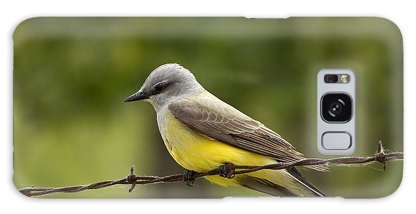 Yellow-bellied Fence-sitter Galaxy Case