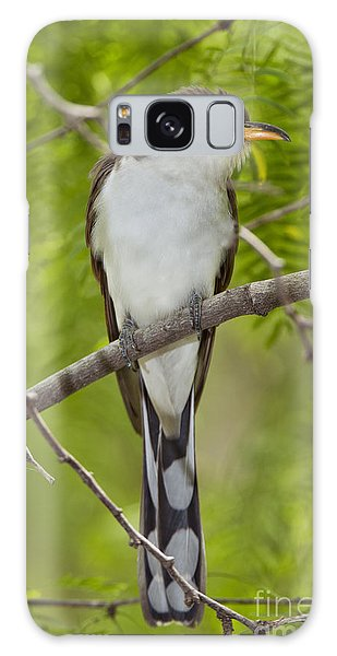 Yellow-billed Cuckoo Galaxy Case by Anthony Mercieca