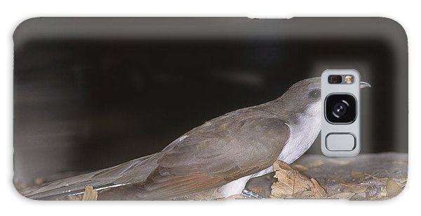 Yellow-billed Cuckoo Galaxy Case by Gregory G. Dimijian, M.D.