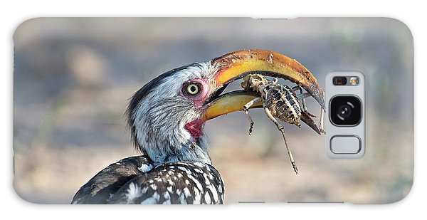 Yellow-billed Hornbill Eating A Cricket Galaxy Case