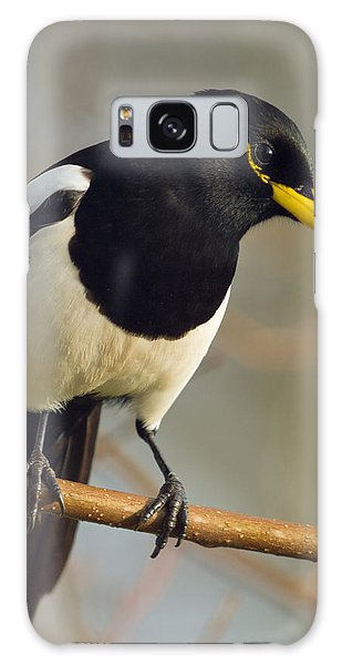 Yellow-billed Magpie Galaxy Case