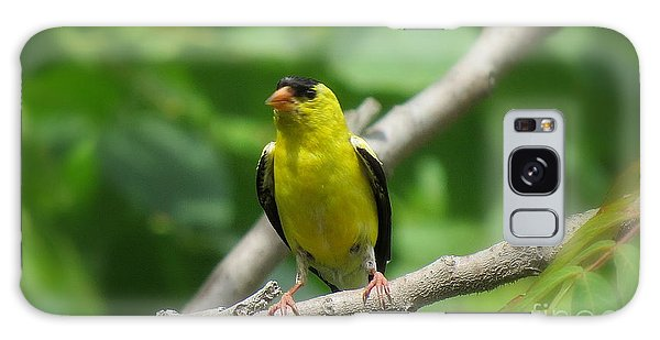Yellow Bird Galaxy Case by France Laliberte