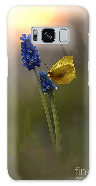 Yellow Butterfly On Grape Hyacinths Galaxy Case